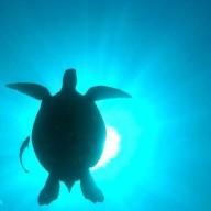 Bali Dream Divers