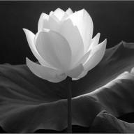 jenniflower
