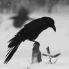 View sir_crow's Profile