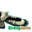 Birding Murcia