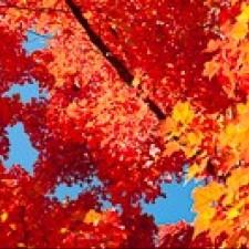 Avatar for openid.aol.com_2 from gravatar.com