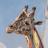Shane Kilkelly's avatar