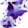 Butterflies55