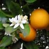 Аватар пользователя apelsincik