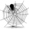 spiderbuber