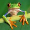 Leap Frog's Photo