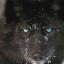 Ardenwolfe