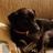 litehound