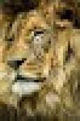D87422f84ddf2218a223c2bfad5bc6fd?default=blank&size=170