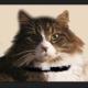 Julie & the Church Cat Kitties