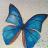 lina_design