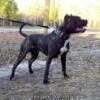 View pitbull1779's Profile