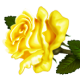 Rose Osuma