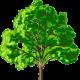 TreeStone