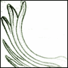 spiralwood