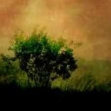 Avatar for bas from gravatar.com