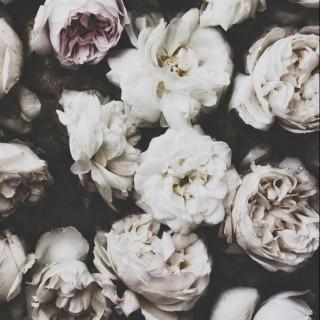 Rosé Blanche