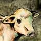 Muh Muhten's avatar