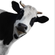 smart001's avatar