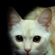 Profile picture of ReemAlHashmi