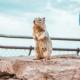 fearlesssquirrel