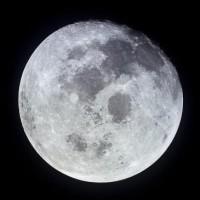 moonbogg