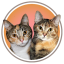 Peaches and paprika, Calico Cats of Distinction