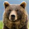 Grizzli_Ber