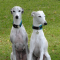 fastwhippets