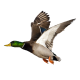Profile picture of quackofdawn