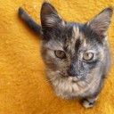 Profile picture of ivandertuin