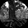 blurryroots