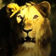 lionjill