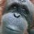 stevecastaneda profile image