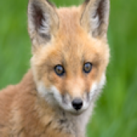 Foxiemisha