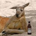 FPL Kangaroo