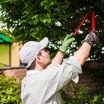 Medford Tree Service