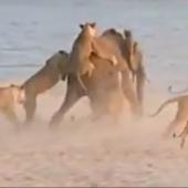 Best Wildlife Videos