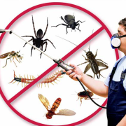 Photo of Get Pest Control