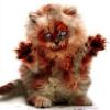 icocoadev avatar