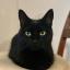 avatar for Amanda Madru