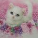 miss_kitty1965