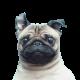 NiteWingerL's avatar