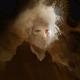 LordXaras's avatar
