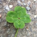 avatar for Anna Bouka