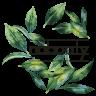 Avatar for M @plantbasedkw