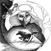 facci0s0 avatar