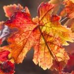 Romany Lambert