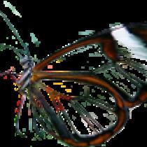 Illustration du profil de enebre