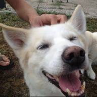 bago avatar